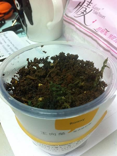 2012-2-9 第一天種下綠豆