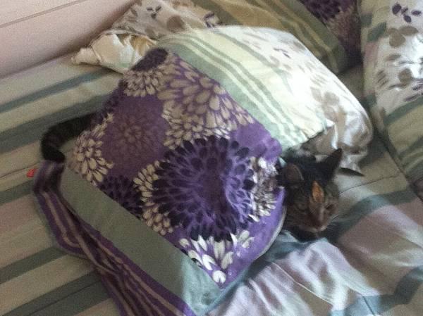 躲在枕頭下的米漿
