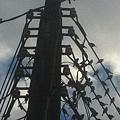 景美停滿鳥的電線桿