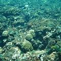 漂亮的海底世界