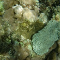 還是活的珊瑚喔