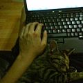 打電腦時米漿睡手邊