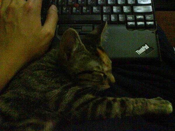 米漿睡在打電腦的手邊