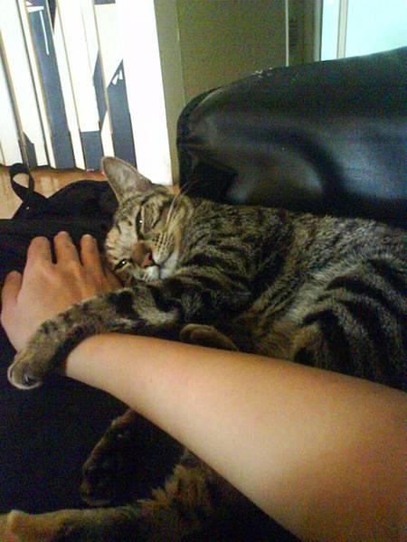 米漿抱著我手睡覺