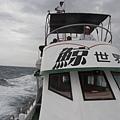 船長在努力搜尋海豚