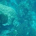 這張照片開始就是到石朗的浮潛點拍的照片了。