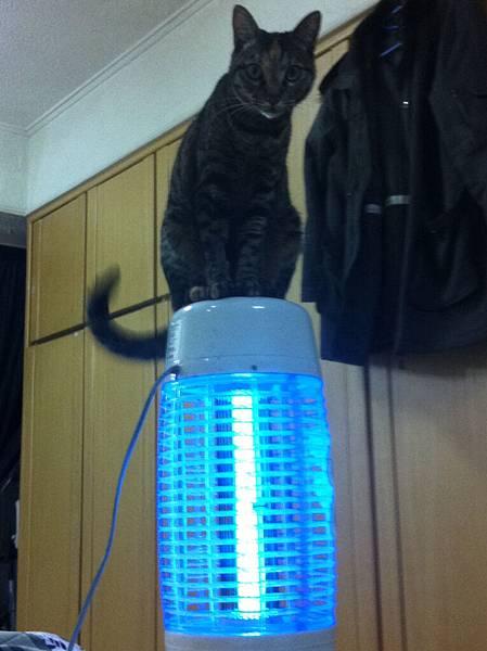 站在捕不到蚊子的捕蚊燈的米漿