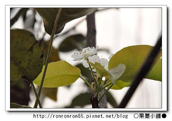 照片 219-1.jpg