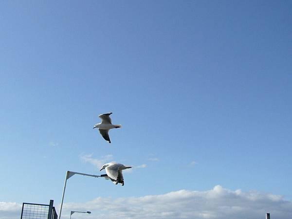 真的停在風中的鳥.jpg