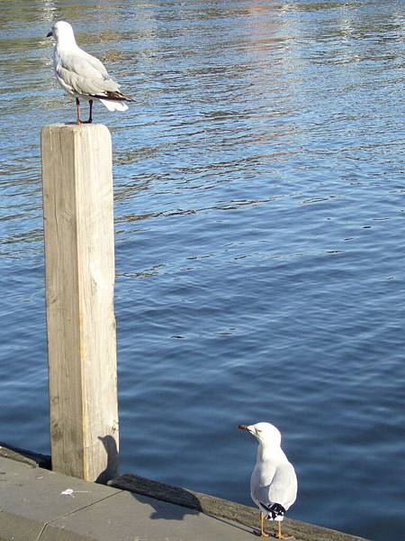 第一次看到水鳥超開心的.jpg