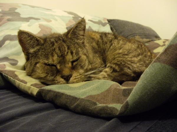 JO的貓偷睡我的床.JPG