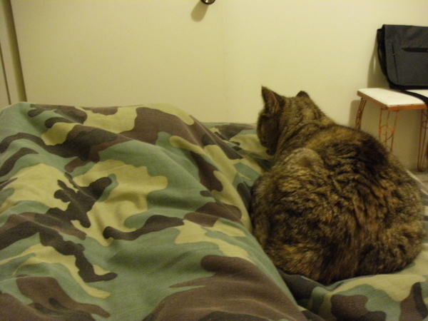 她不喜歡睡我旁邊只喜歡睡我的腳旁= =.JPG