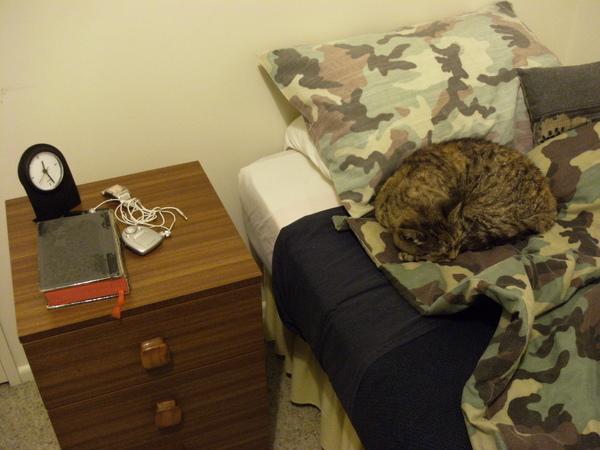 常常一回房間猛然一看~差點壓死一隻貓.JPG