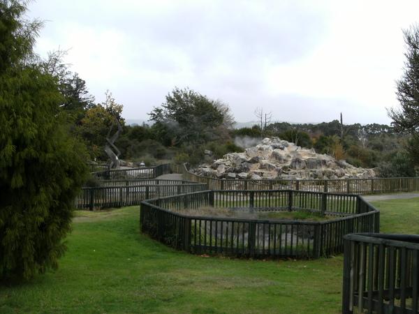 tauranga的地熱公園.JPG