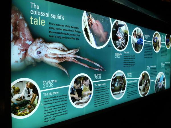 它是無意間被補上來的~超大隻~KIWI為了這隻魷魚而做了很多事情~包括這個館.JPG