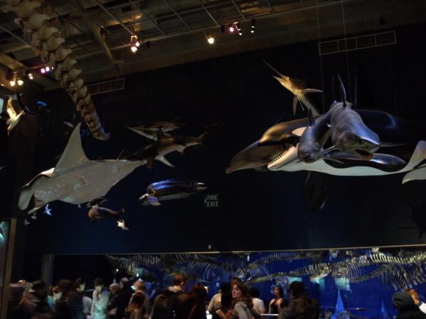 這裡有一隻超大的魷魚喔.JPG