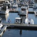 還有人在釣魚,挪威釣魚要申請證件