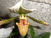 蘭花2.jpg