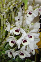 蘭花4.jpg