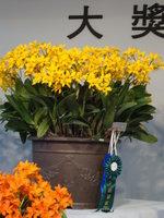 蘭花21.jpg