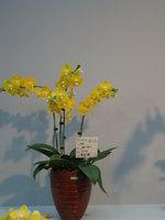 蘭花18.jpg
