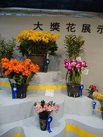 蘭花 19.jpg