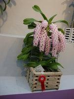 蘭花 22.jpg