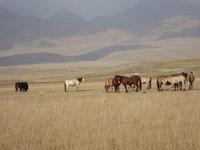 北疆深入草原的群馬.jpg