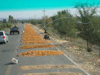 北疆馬路曬玉米.jpg