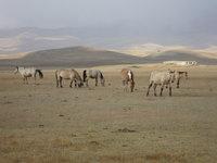 北疆群馬.jpg
