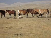 北疆群馬3.jpg