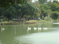 中興湖6.jpg