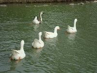 中興湖7.jpg