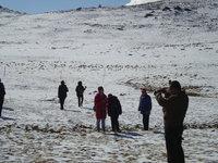 北疆大雪17.jpg