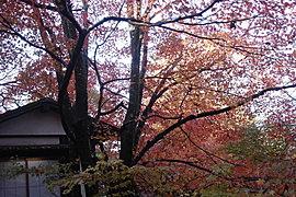 賞楓27---三千院2.jpg