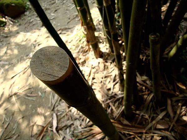 印度實竹.jpg