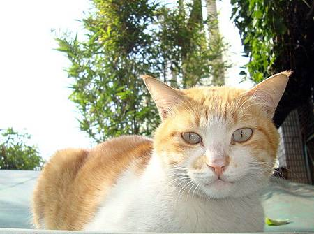 貓咪毛毛(攝影  詩韻)