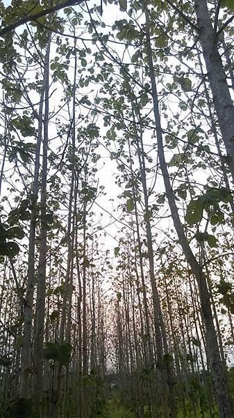 泰國柚木林園
