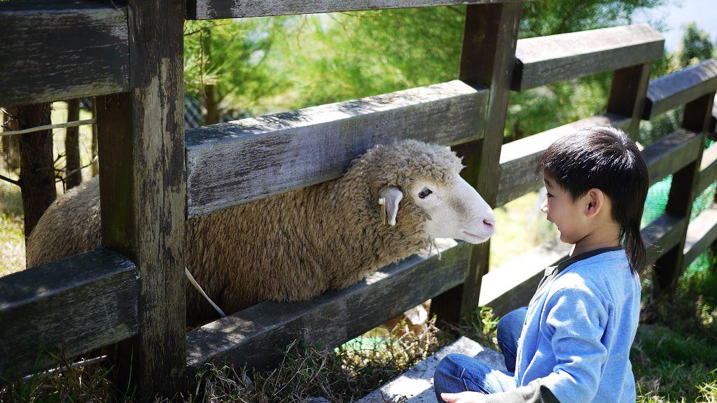 2012.10 Roy首次到清境-青青草原看綿羊及馬術