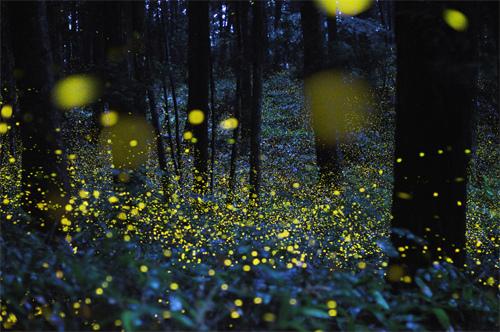 344-fireflies-01.jpg