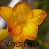 雜教2014(20).JPG