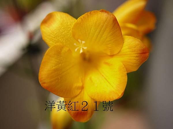 雜教2014(23).JPG