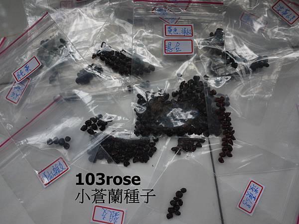 103小蒼蘭(2).JPG