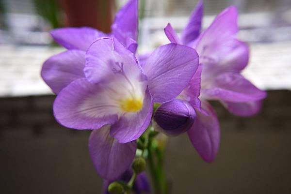 104紫花.JPG