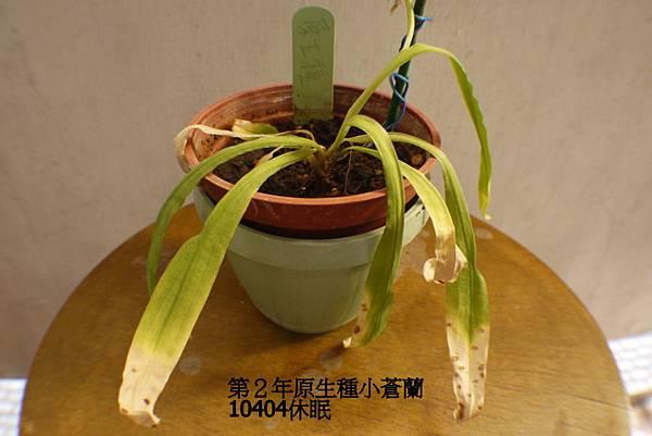 第2年原生種10404(2).JPG