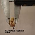 第2年原生種10404(3).JPG