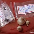 10404購買種子.JPG