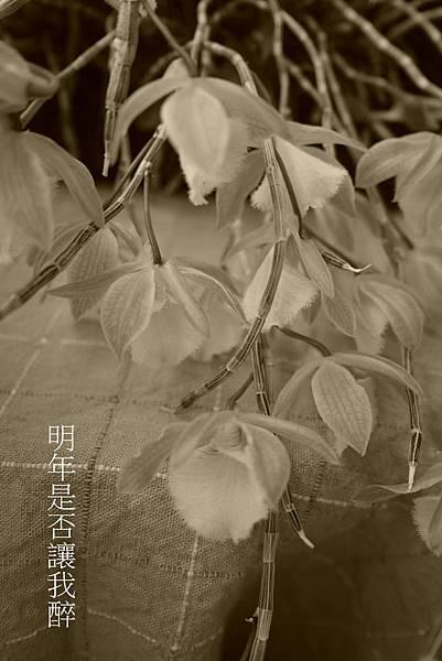104天宮(4).JPG