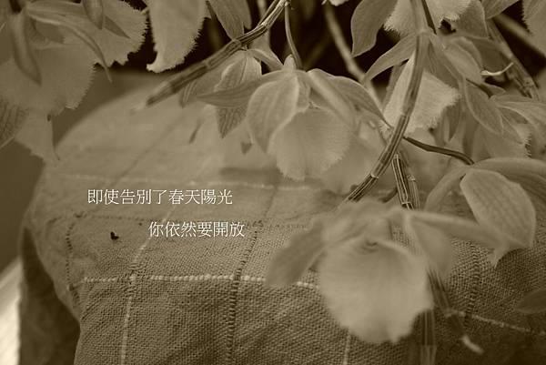 104天宮(5).JPG