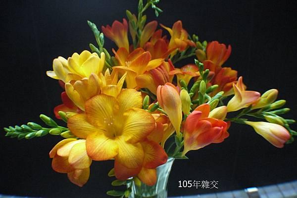 105年(15).JPG